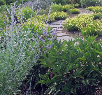 Sustainable landscapes are easy to maintain